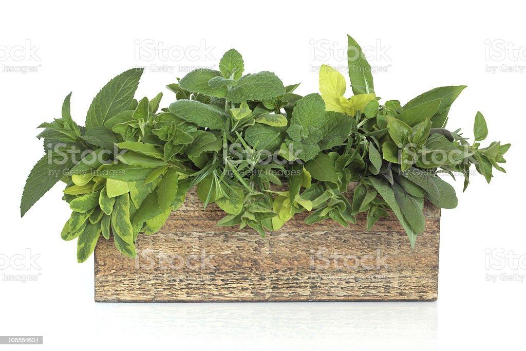 Herb Leaf Mixture royalty-free stock photo