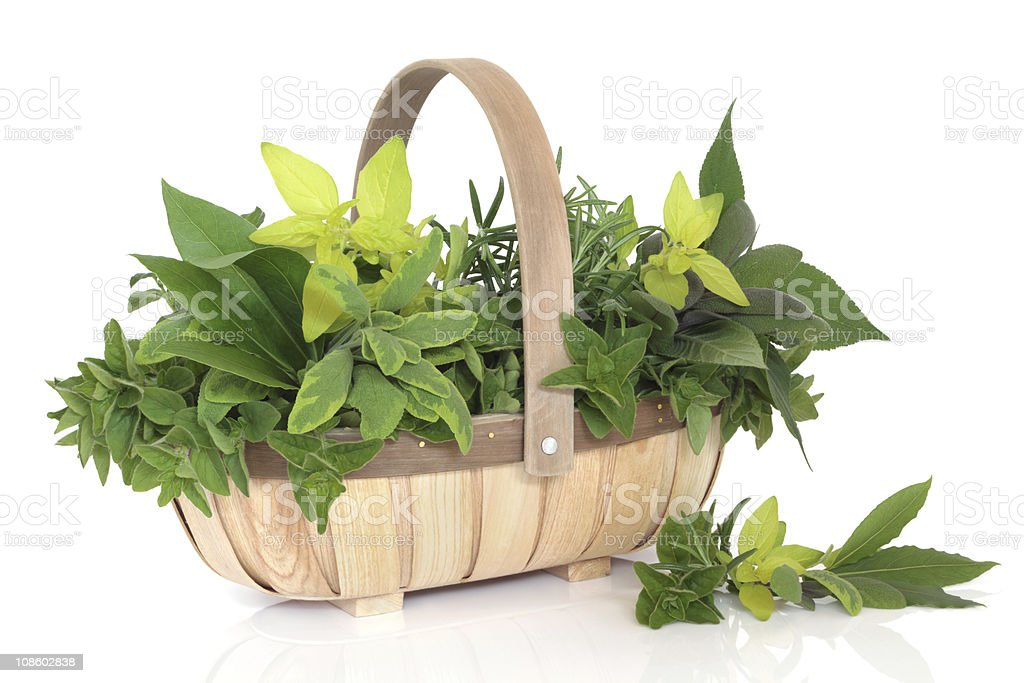 Herb Leaf Selection royalty-free stock photo