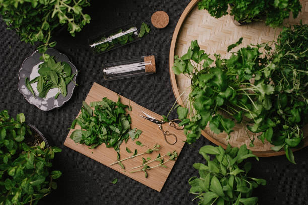 Herb leaves fresh picked herbs saved and dried stock photo
