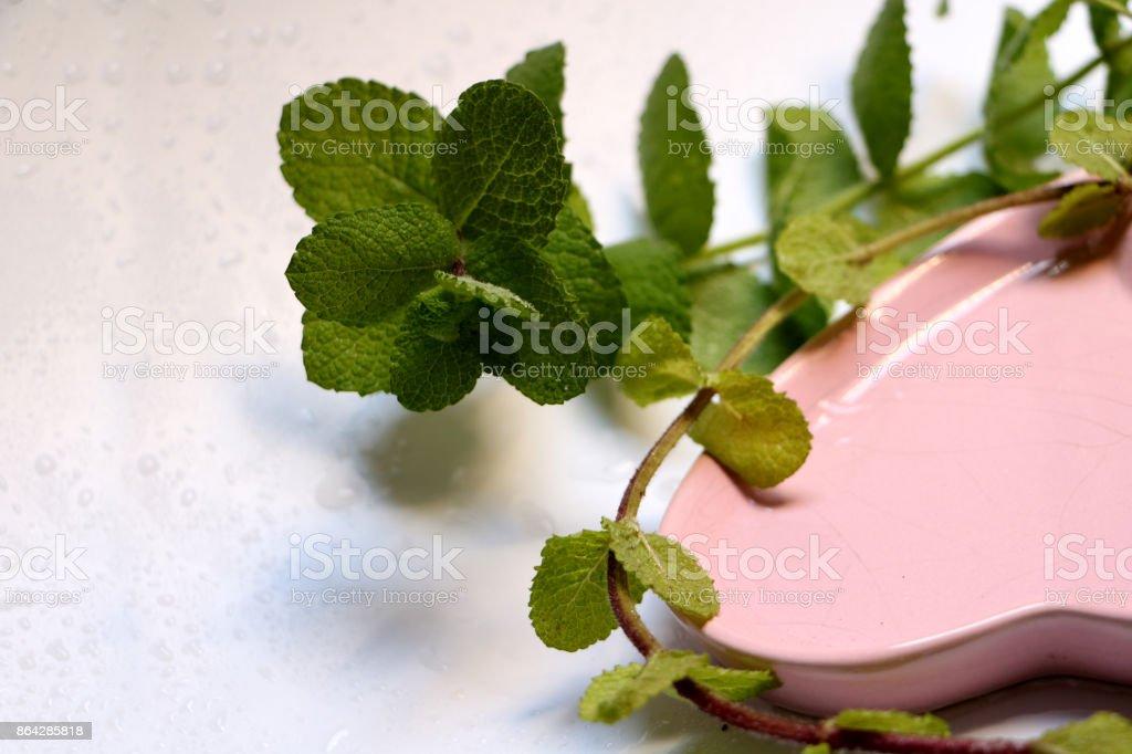 Herb lemon balm royalty-free stock photo