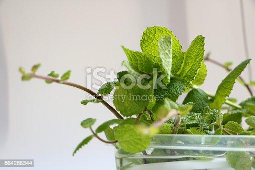 Herb Lemon Balm Stock Photo & More Pictures of Alternative Medicine