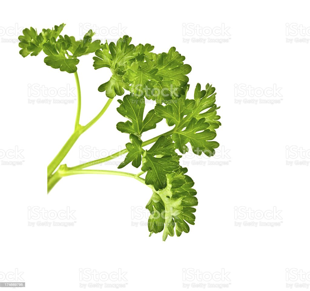 Herb parsley royalty-free stock photo