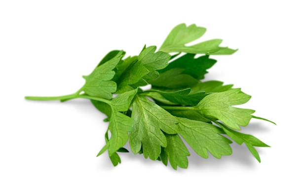 herb - parsley stock photos and pictures