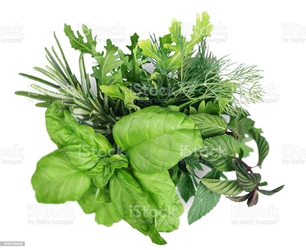 Herb stock photo