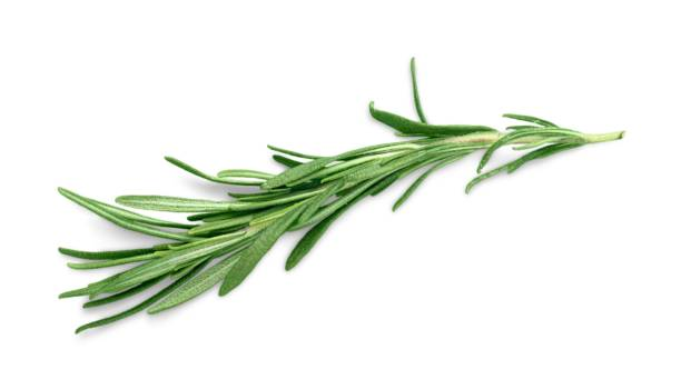 Herb. Collection of herbs thyme photos stock pictures, royalty-free photos & images