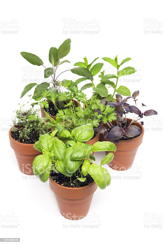 Herb Potted Plants Selection in Flower Pots, Seedlings on White royalty-free stock photo