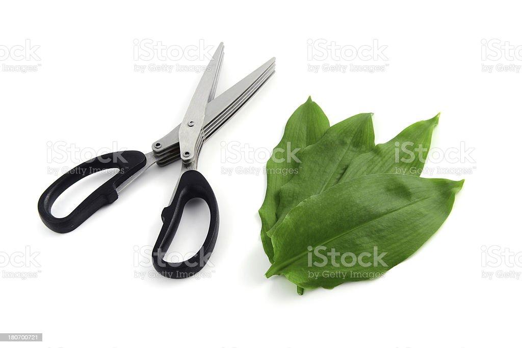 herb scissors and leaves of wild garlic (Allium ursinum) stock photo