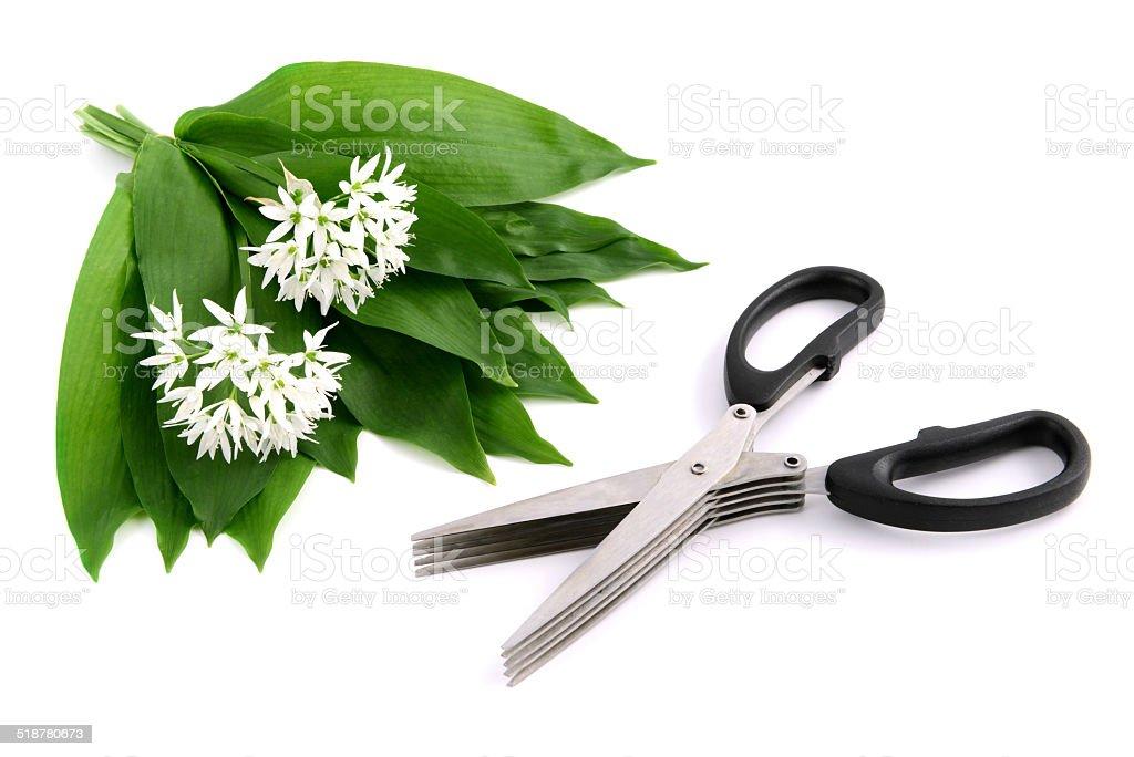 herb scissors and wild garlic stock photo