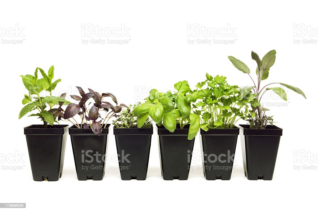 Herb Seedling Plants royalty-free stock photo
