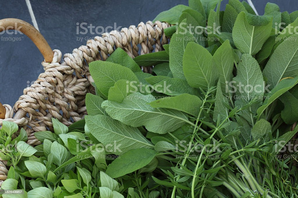 Herb selection royalty-free stock photo