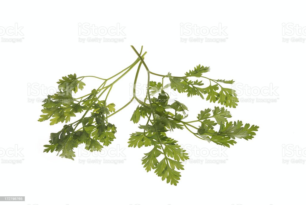 herb series- chervil royalty-free stock photo