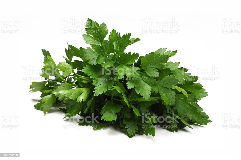Herb Series Coriander - Cilantro royalty-free stock photo