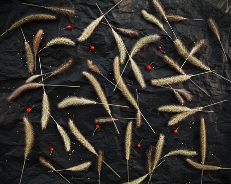 Herb spikelets and red berries on black background. Herbarium pattern