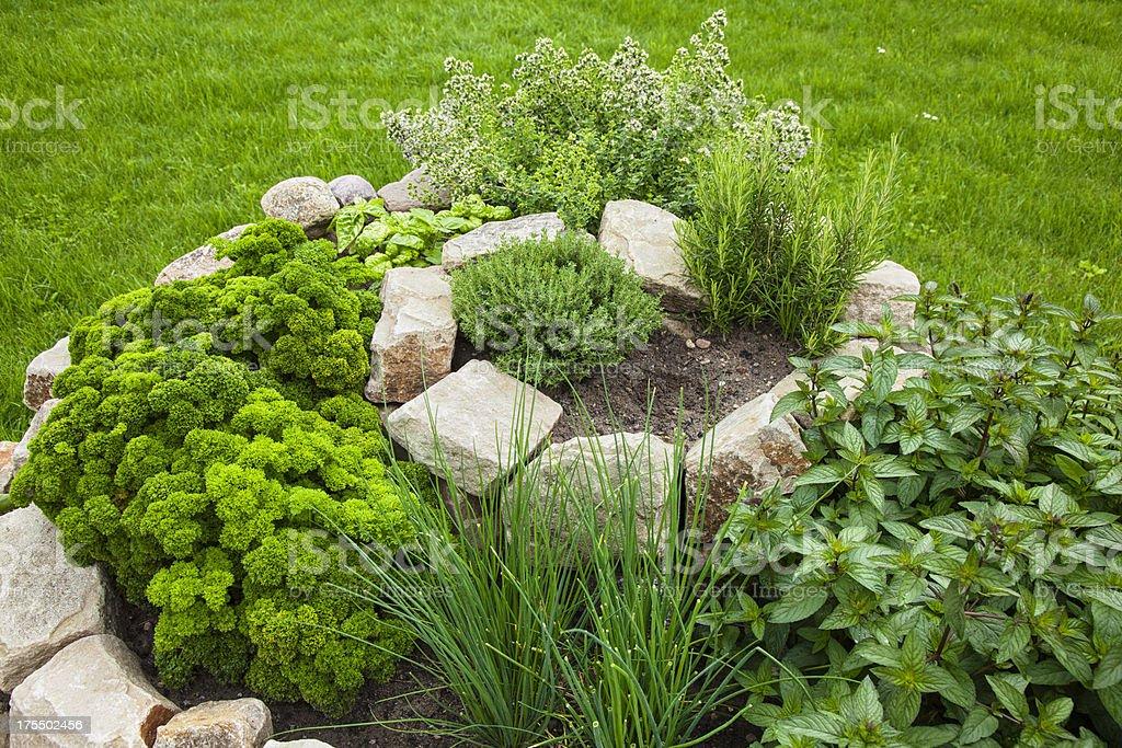 Spirale aux herbes - Photo