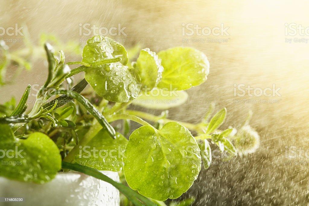herb água splash frescor - foto de acervo