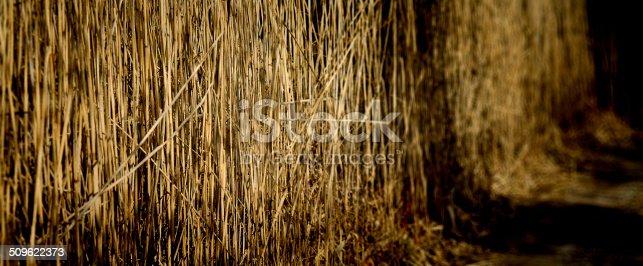 istock Herbage ensoleillé 509622373