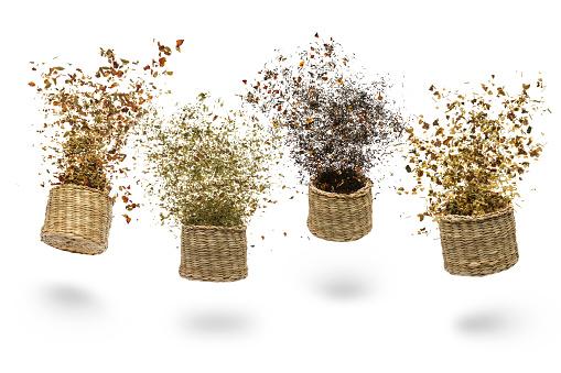 herbal blend for tea