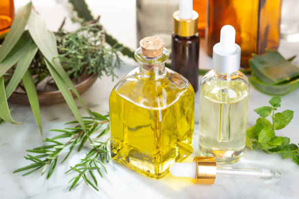 Herbal essential oil. Rosemary oil, eucalyptus oil, aloe vera, pepermint and fir oil for aromatherapy, wellness, skin care, herbal remedies stock photo