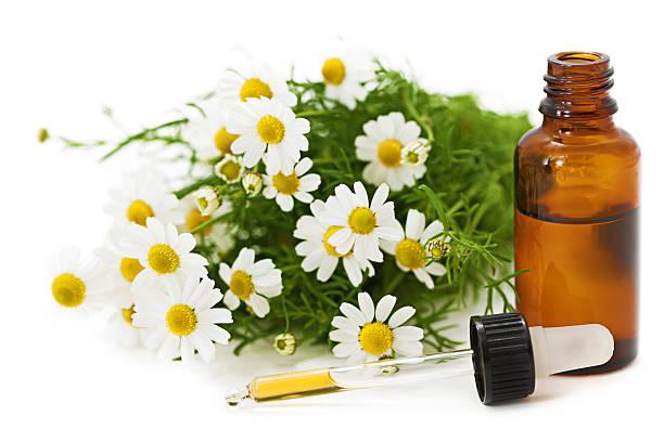 medicina herbaria: de manzanilla - planta de manzanilla fotografías e imágenes de stock
