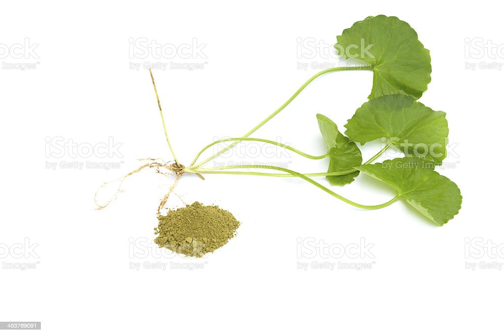 Herbal medicine from Centella asiatica royalty-free stock photo