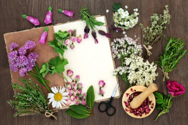 pflanzliche arzneimittel-vorbereitung - thymian trocknen stock-fotos und bilder