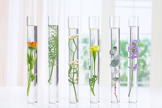 Herbal medicine researchpants in test tubes picture id617384288?b=1&k=6&m=617384288&s=612x612&w=0&h=hoosb3fnbqhg44gmp5mdmghfi8tpvd edfrzajbxds0=