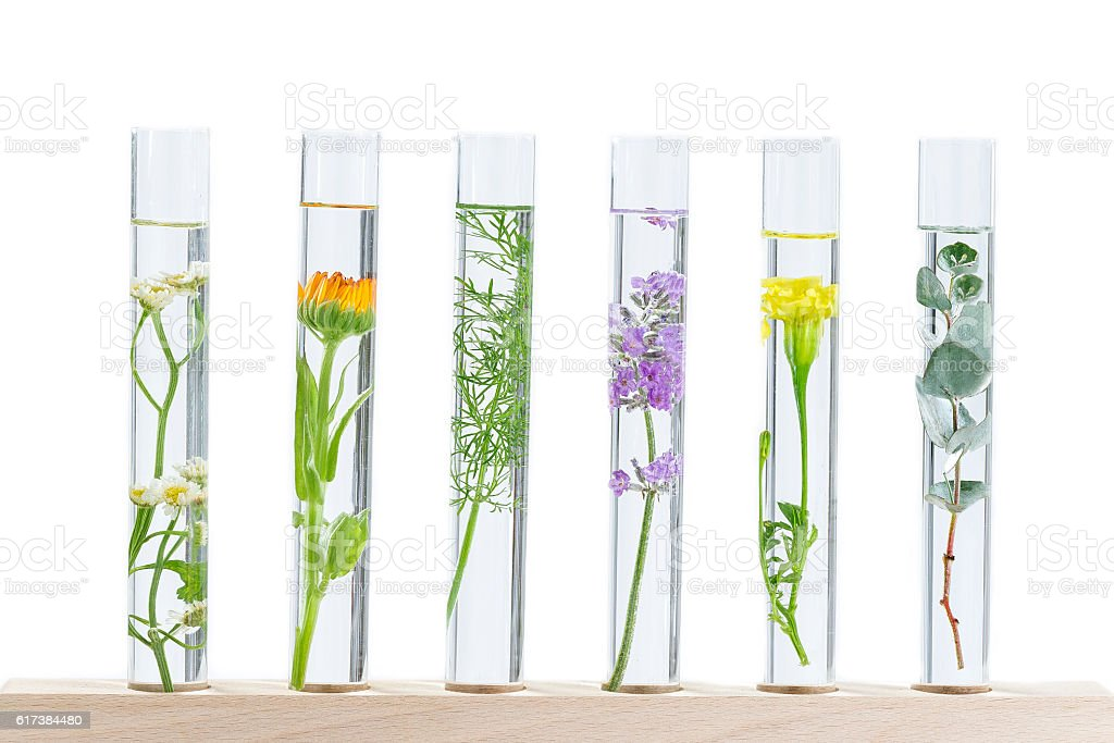 herbal medicine researchPants in test tubes stock photo