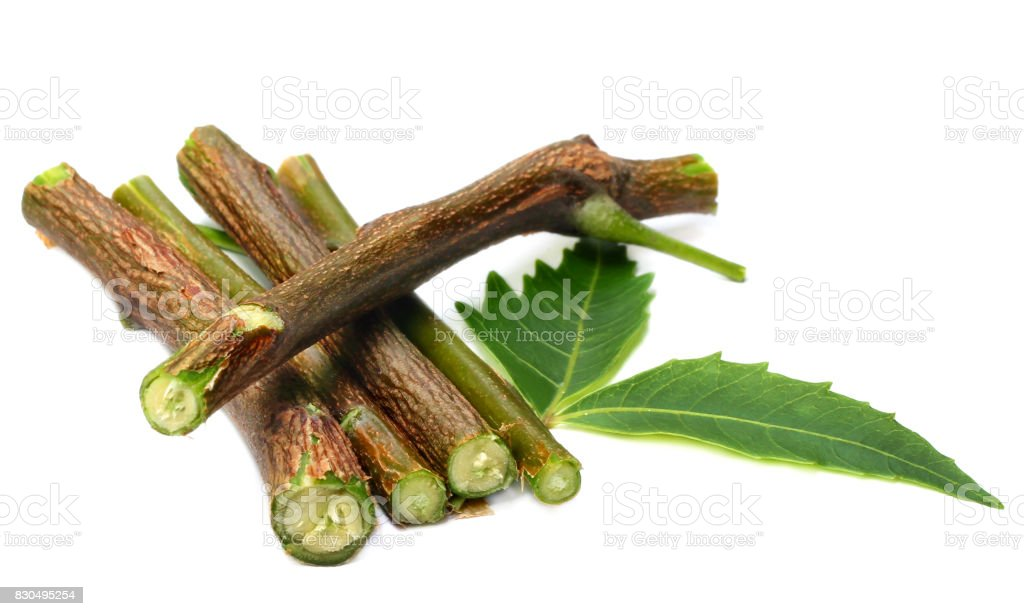 Herbal neem leaves and branch stock photo