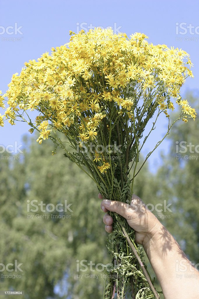 Herbal royalty-free stock photo