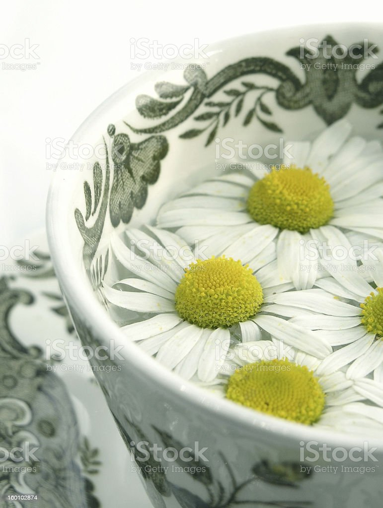 herbal tea - camomile stock photo
