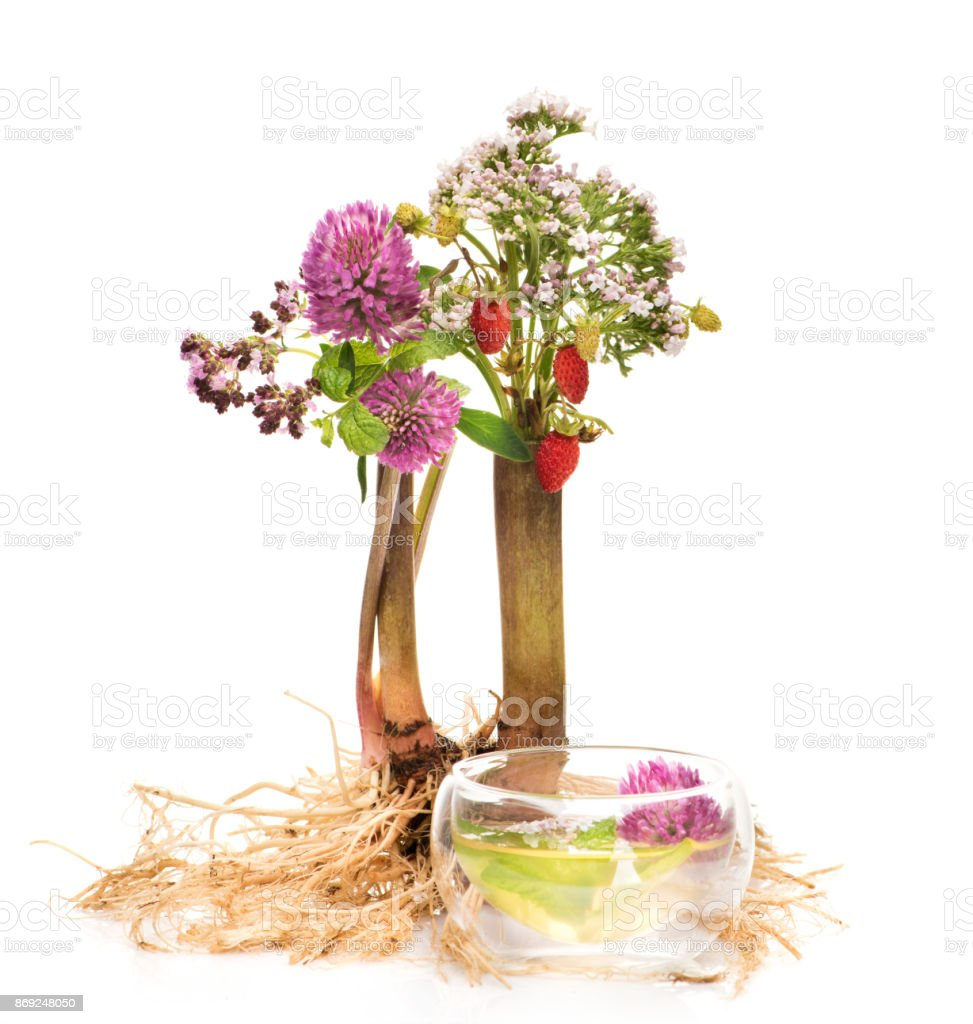 Kräuter-Tee, Kräuter und Blumen. Pflanzliche Arzneimittel-Konzept – Foto