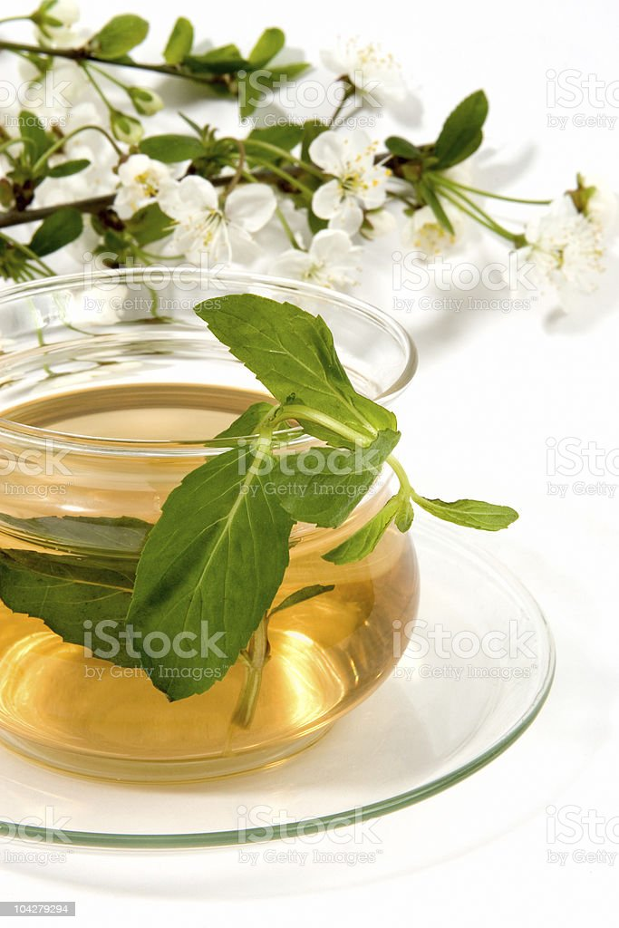 herbal tea with mint royalty-free stock photo