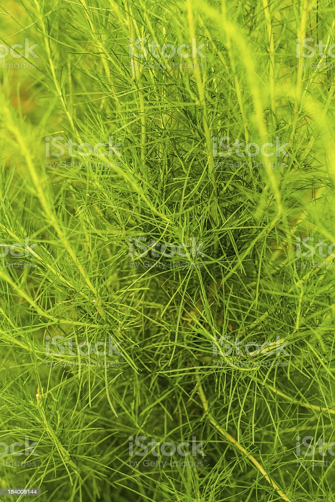 Herbal vegetable royalty-free stock photo