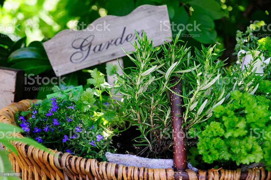 herbals stock photo