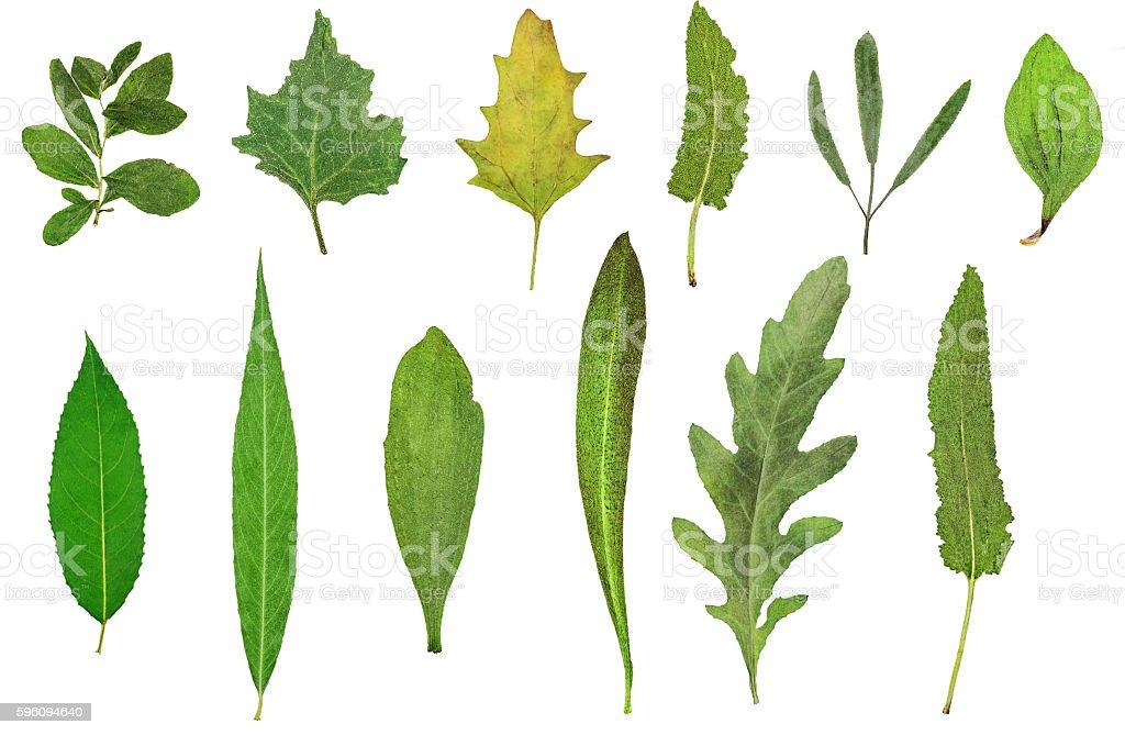 Herbarium royalty-free stock photo