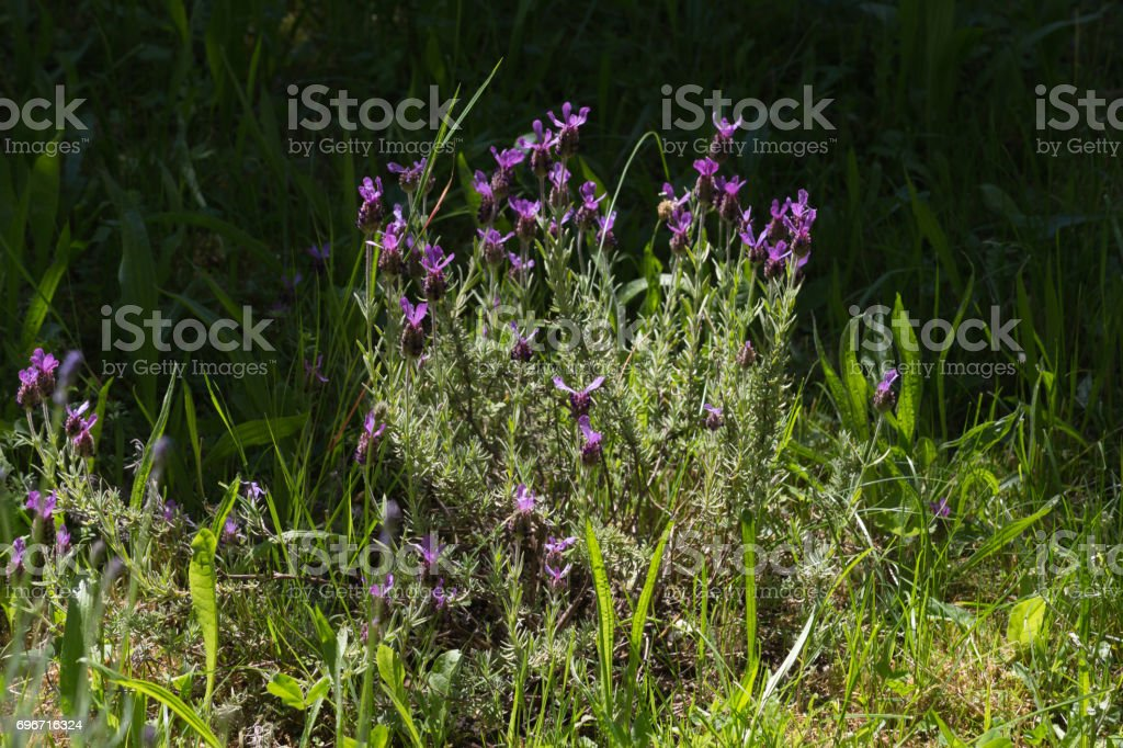 herbary garden in summer in south germany in a monastery area stock photo
