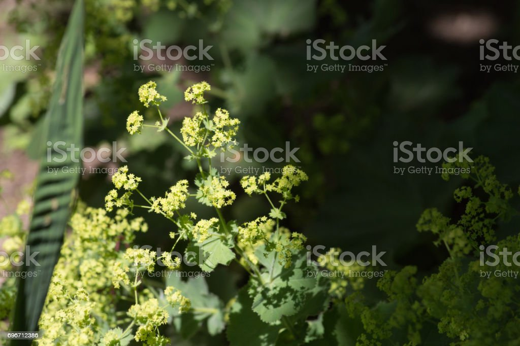 herbary garden in summer in south germany in an area stock photo
