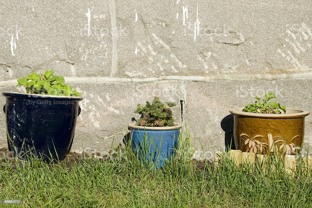 Herbes at sunny wall stock photo
