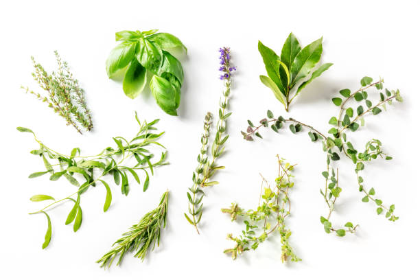 Herbes de Provence, traditional French aromatic herbs, overhead shot stock photo