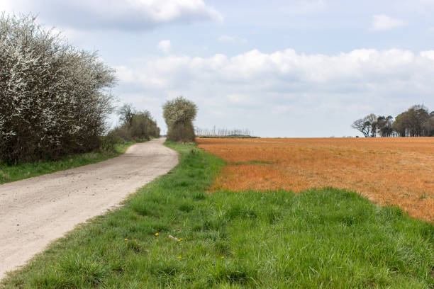 herbicide – Foto