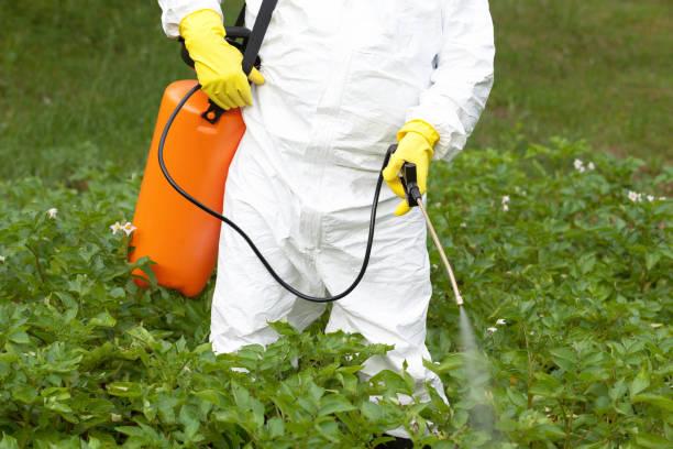 Herbizid-Sprühen. Bio-Gemüse. – Foto