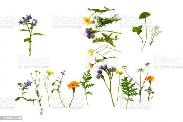 Herbs and flowers on white background picture id1059326618?b=1&k=6&m=1059326618&s=612x612&h=v retmleebdfwwq1wwi6kxxtnxnbqcijt ts4mhbm3w=