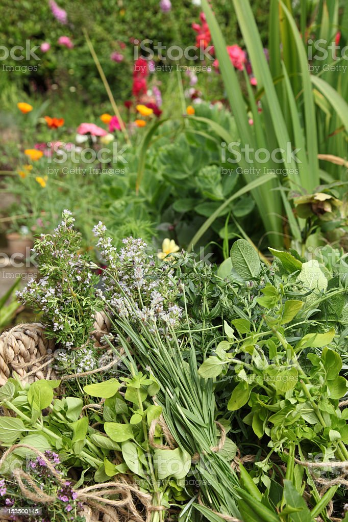 Herbs and garden royalty-free stock photo