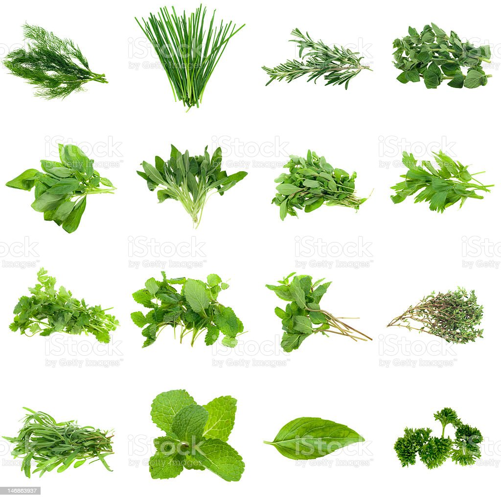 Herbs Collection stock photo