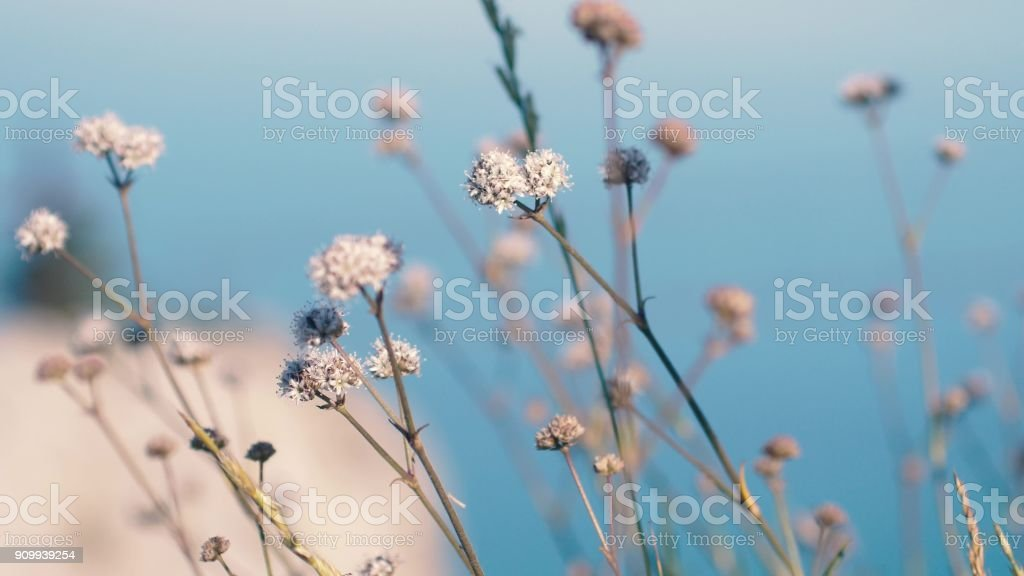 Herbs, flowers, grass in blurred background of sea and mountain stock photo