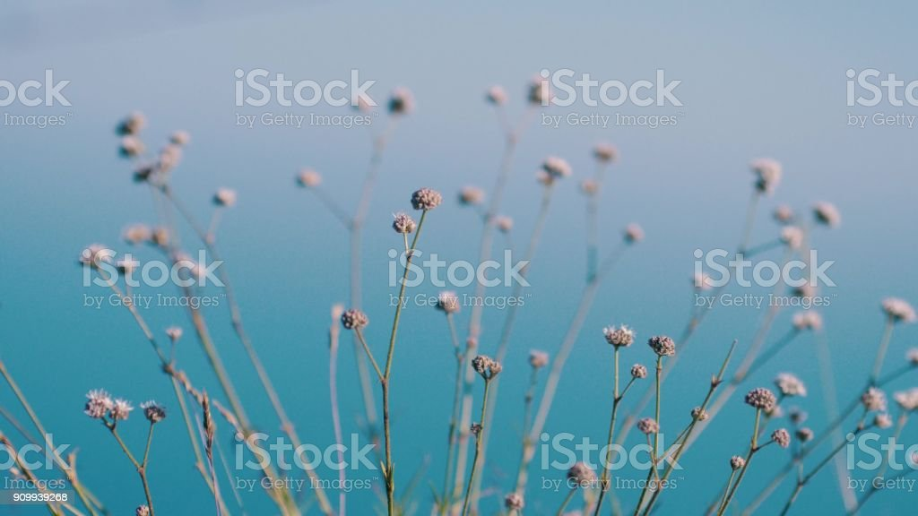 Herbs, flowers, grass in blurred background of sea stock photo