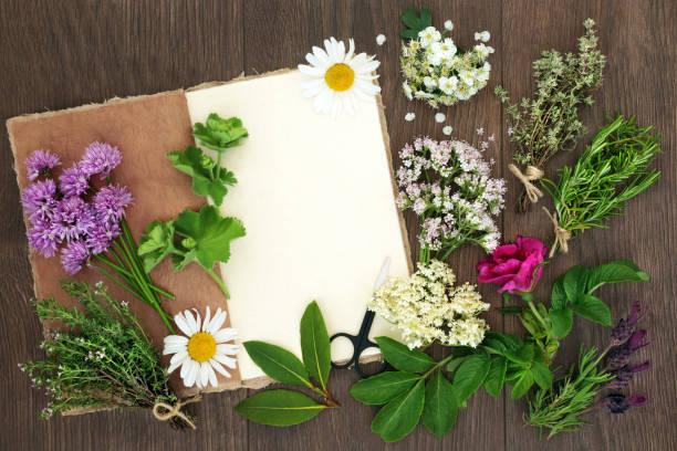 kräuter für pflanzliche arzneimittel - thymian trocknen stock-fotos und bilder