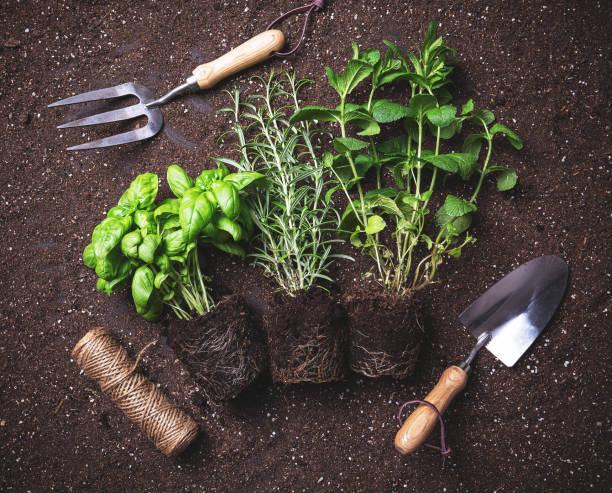 Herbs freshly harvested stock photo