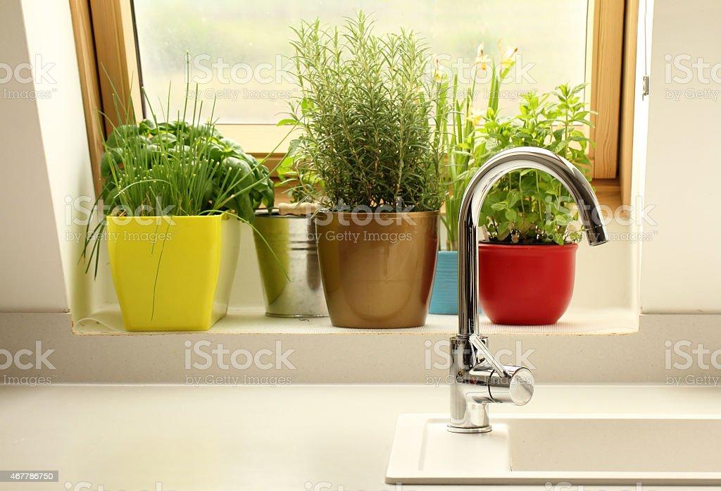 Kräuter wachsenden in der Küche – Foto