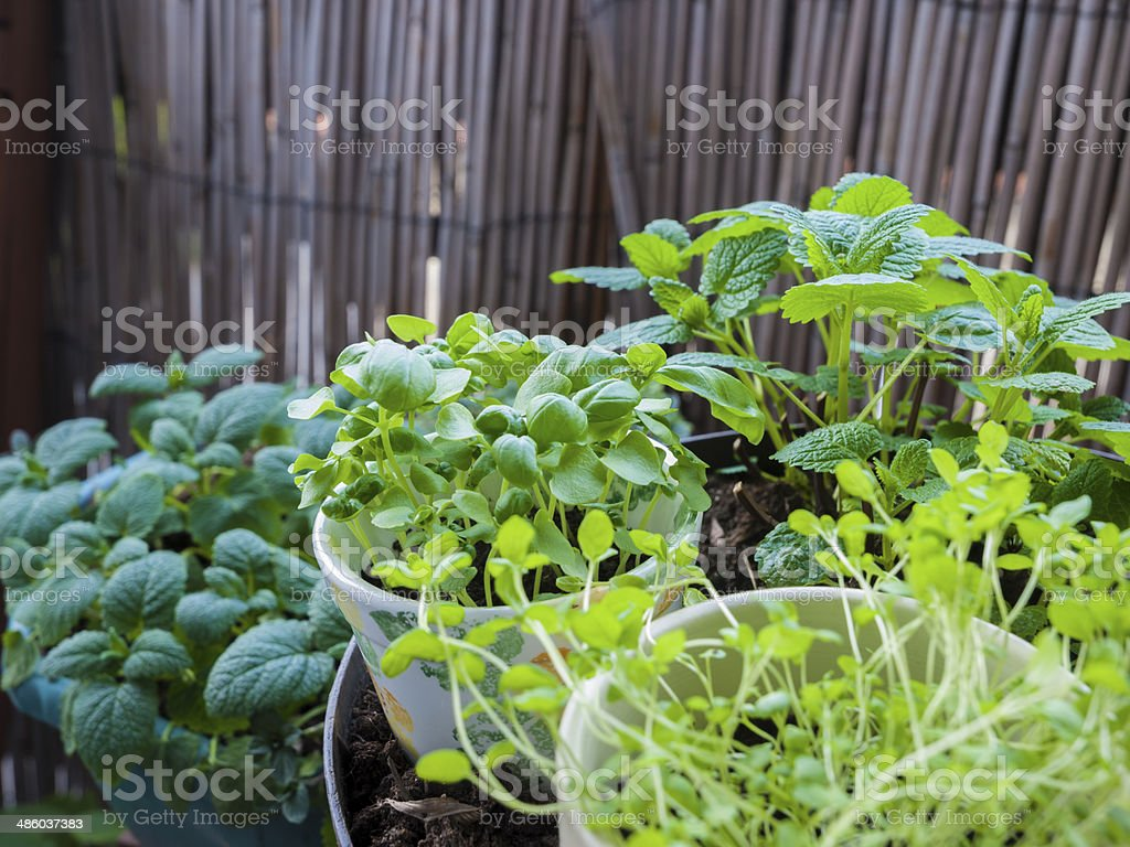 Hierbas creciente en un balcón - Foto de stock de Aire libre libre de derechos